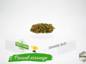 Orange Bud 5,43% PROMO