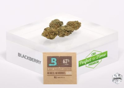 BLACKBERRY-Boveda