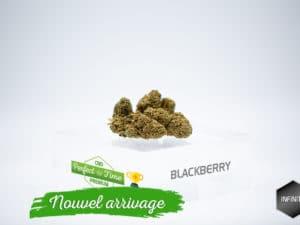 BlackBerry 3,87%