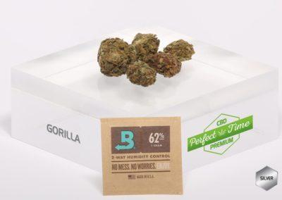 GORILLA-Boveda