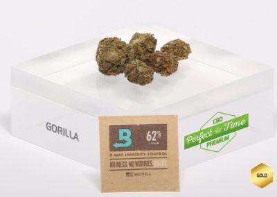 GORILLA-Boveda-G