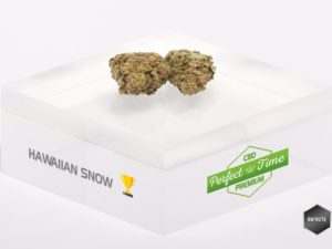 hawaiian snow cbd