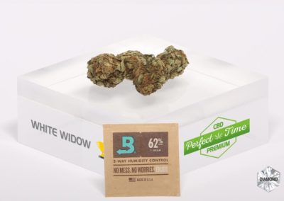 WHITE-WIDOW-Boveda