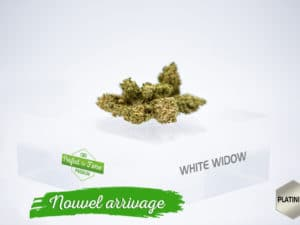 White Widow 3,91%