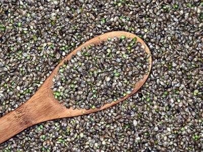 Quels sont les bienfaits des graines de chanvre?