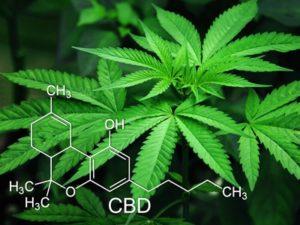 Les effets positifs de la fleur de CBD!
