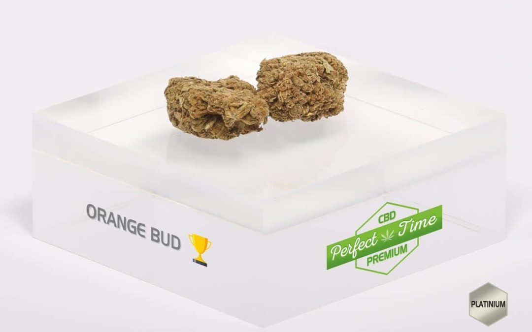 Zoom sur l'Orange Bud