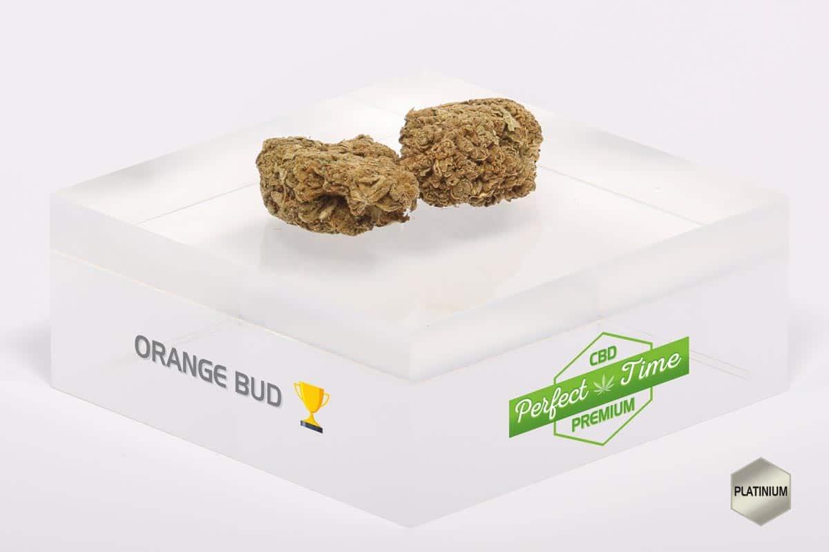 Zoom sur l'Orange Bud