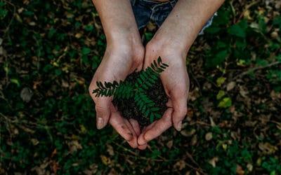 Le chanvre est plus éco-responsable que le coton!