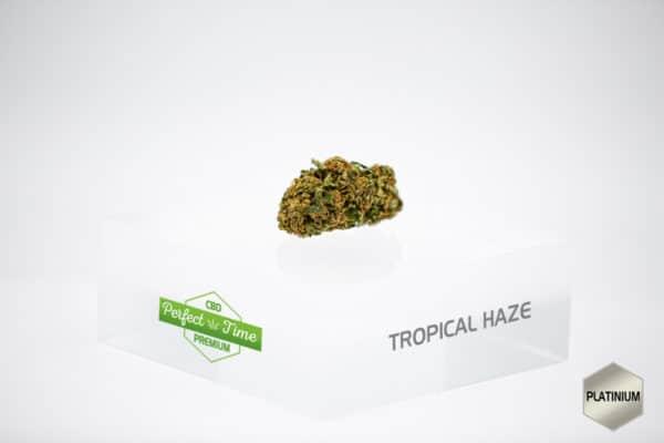 tropical_sans_boveda