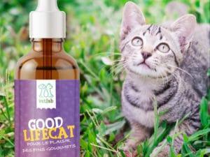 Goodlifecat complément 250 mg CBD