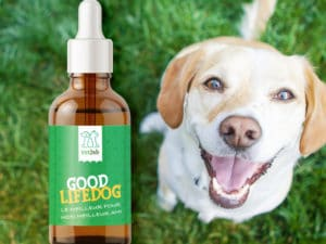 Goodlifedog Complément 250 mg CBD