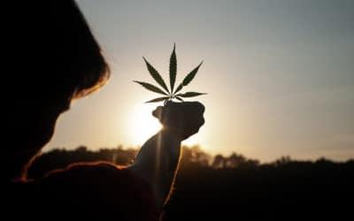 Comment savoir si la vente de cannabis est légale?