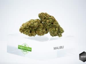 Malibu Sunset (USA) 6,29%
