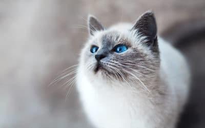 Les essentiels à connaître sur le CBD pour chats