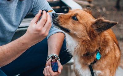 Peut-on utiliser du CBD chez les animaux ?